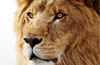 OS X Lion offers Safari access to guests on locked Macs