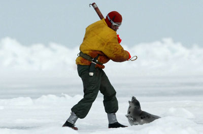 Seal clubbed to death
